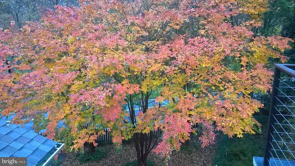 Autumn - 5704 OREGON AVE NW, WASHINGTON
