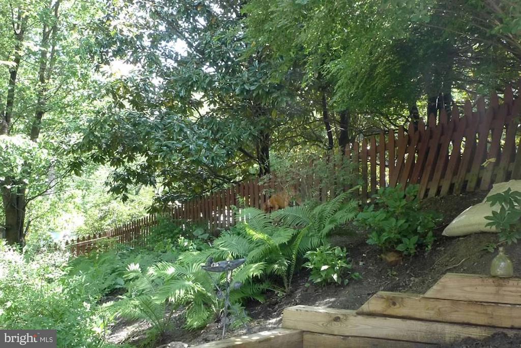 Fern garden - 5704 OREGON AVE NW, WASHINGTON