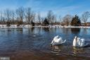 Beautiful Swans on the pond. - 40041 HEDGELAND LN, WATERFORD