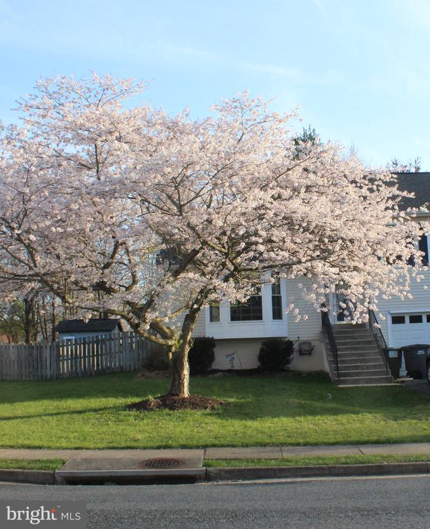 Beautiful Cherry Tree! - 5 TABER CT, STAFFORD