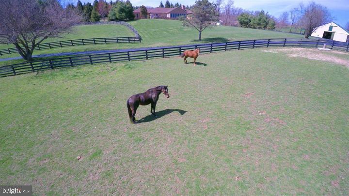 Horse Heaven - 39520 CHARLES TOWN PIKE, HAMILTON