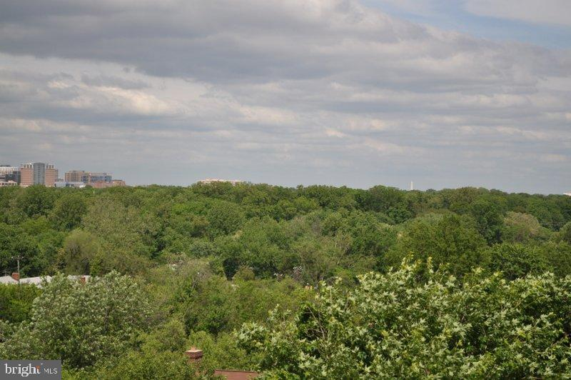 Tree View - 6001 ARLINGTON BLVD #706, FALLS CHURCH