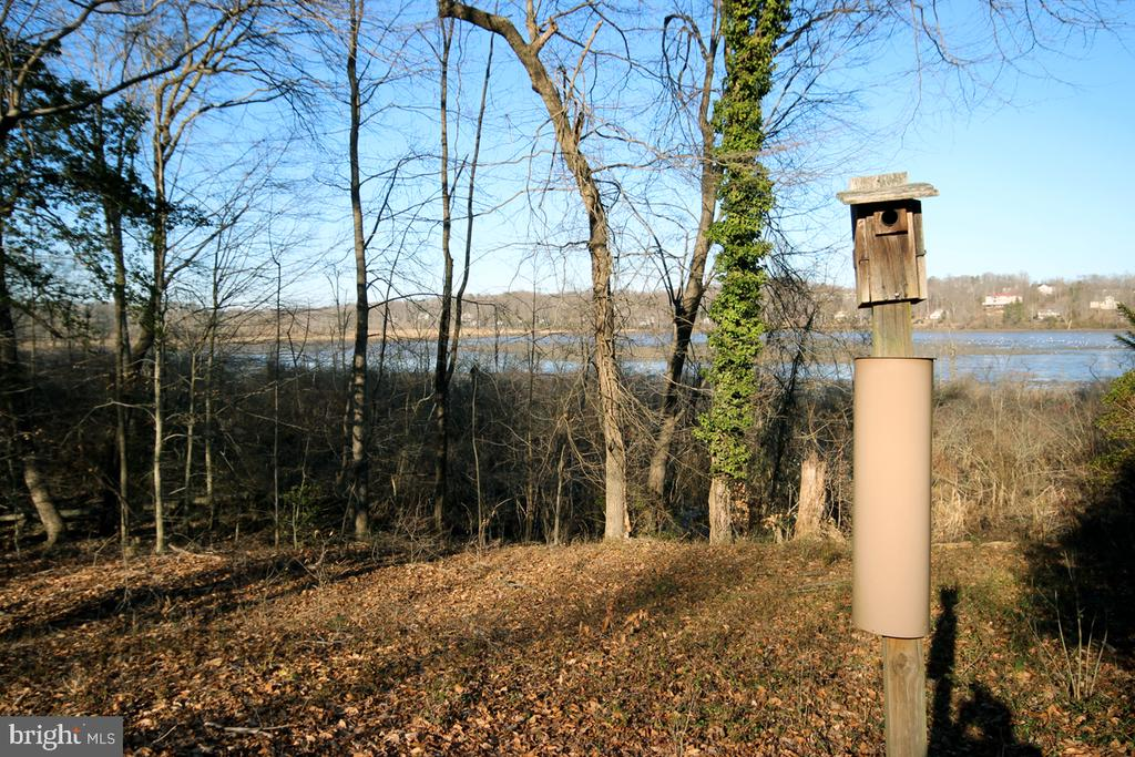 Grab the binoculars is time to Birdwatch - 3225 RIVERVIEW DR, TRIANGLE