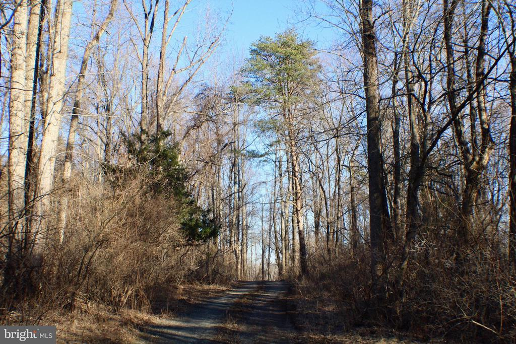 TREE LINED DRIVEWAY TO PROPERTY - 20970 STEPTOE HILL RD, MIDDLEBURG