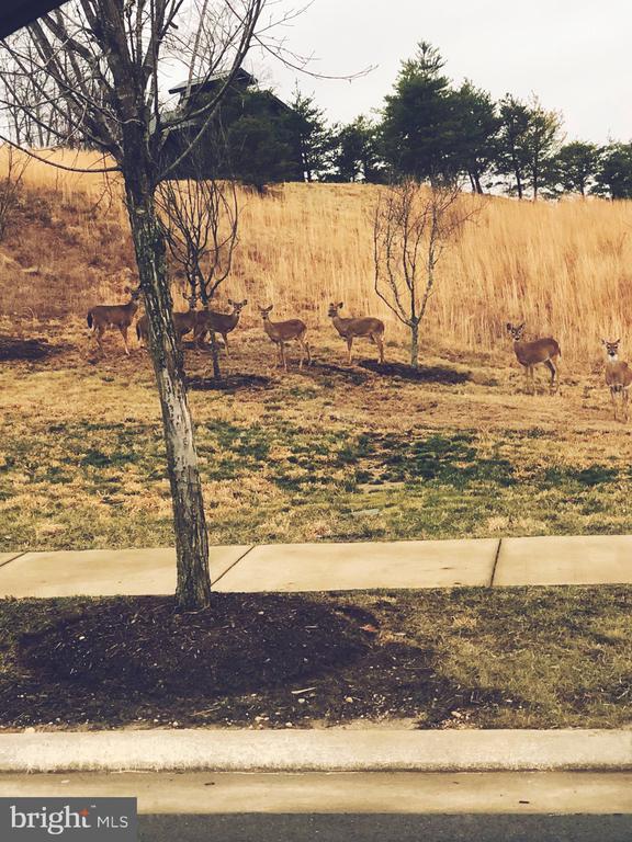Community wildlife - 2565 PASSIONFLOWER CT, DUMFRIES