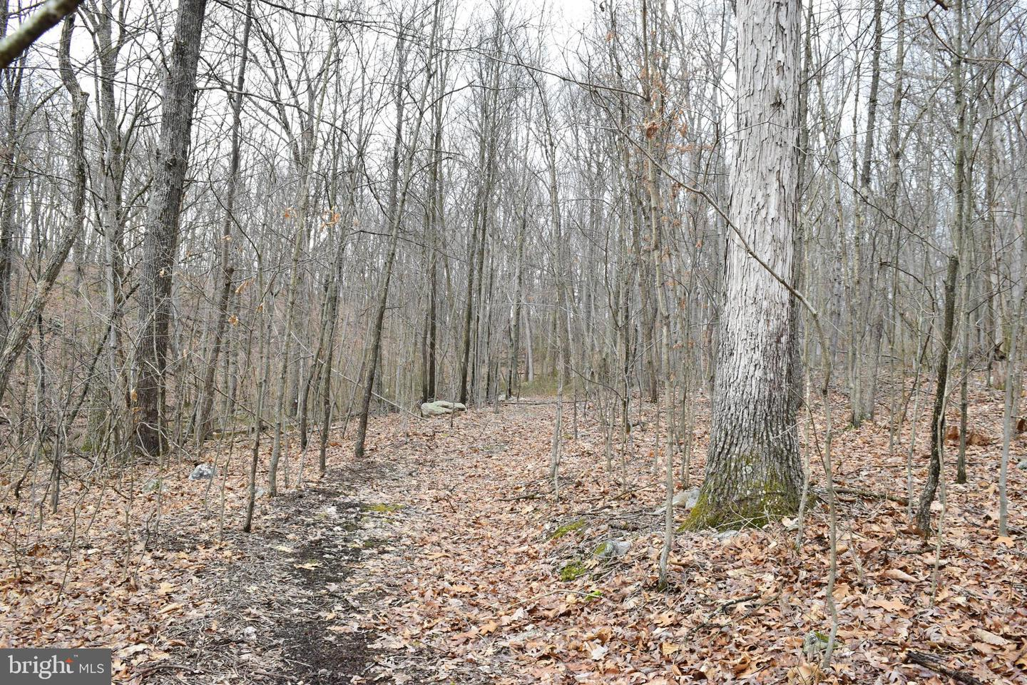 Additional photo for property listing at Leafy Hollow Ln Berkeley Springs, West Virginia 25411 United States