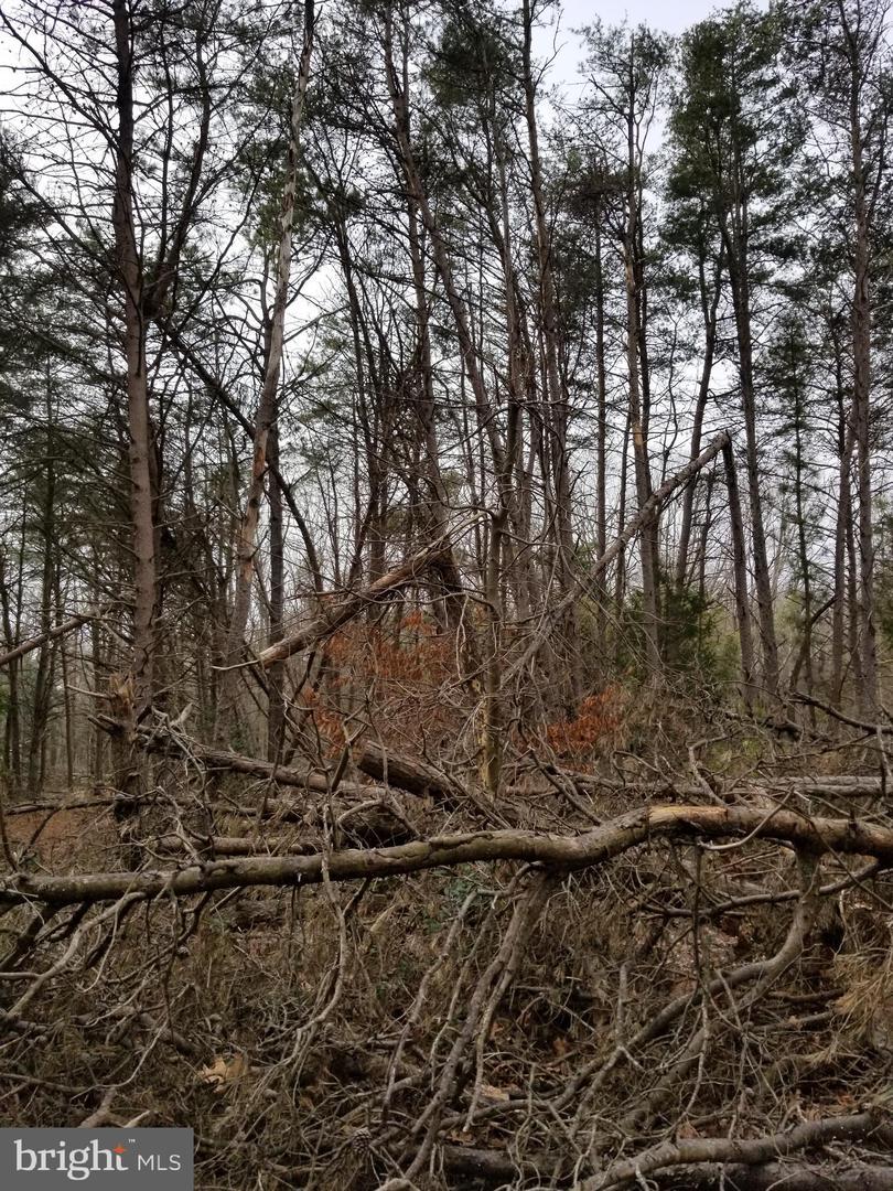 土地 為 出售 在 Quinton, 新澤西州 08072 美國