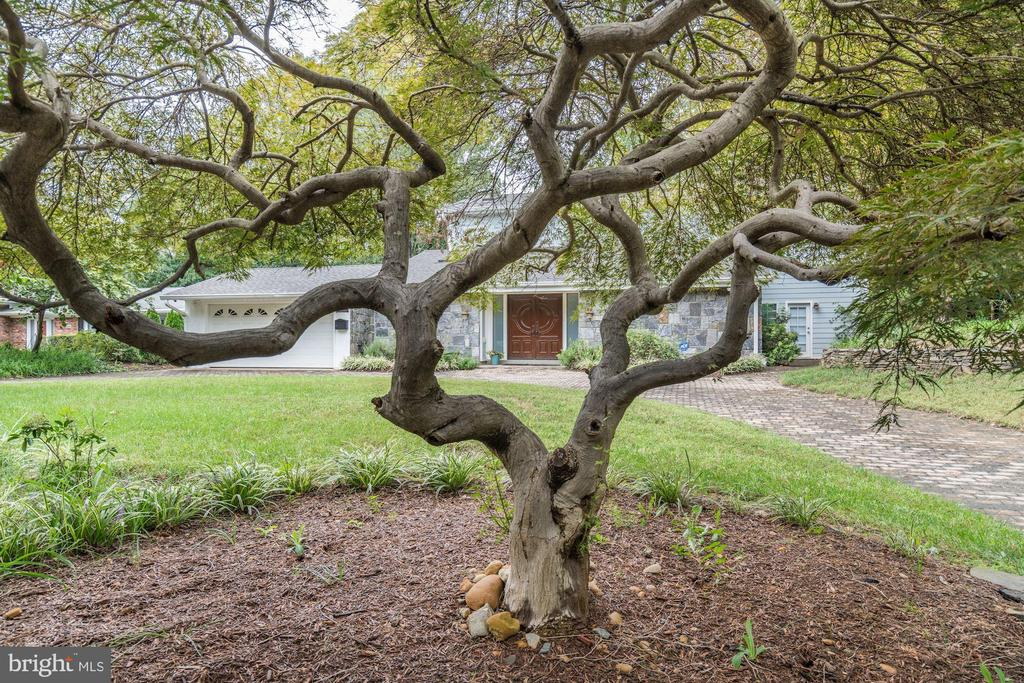 Front Exterior Viewed through Japanese Maple Tree - 3502 PINETREE TER, FALLS CHURCH
