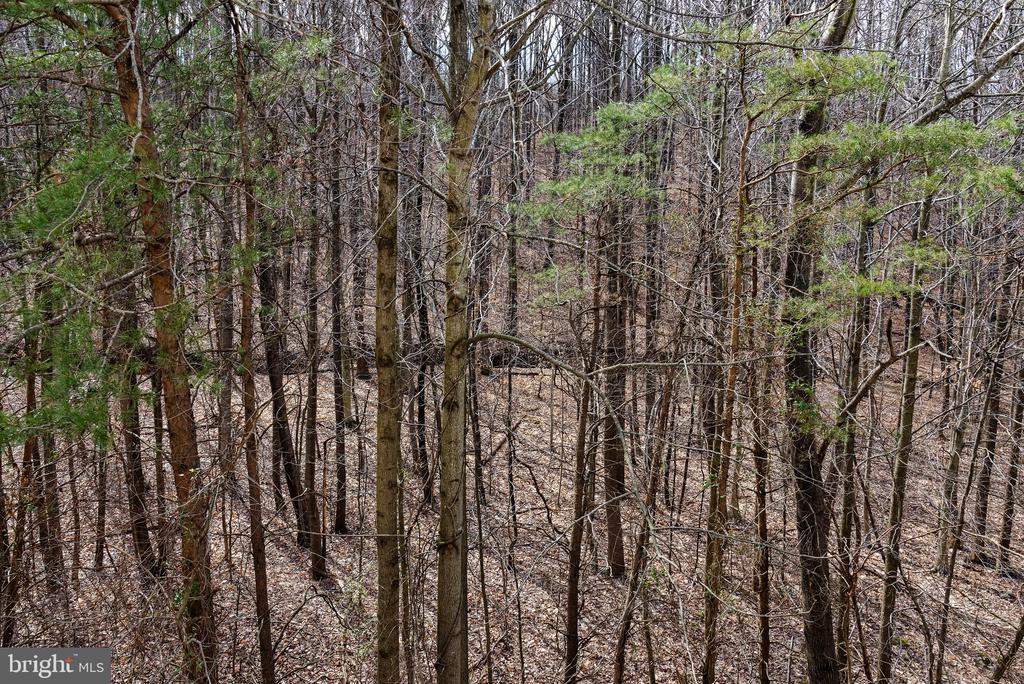 Extensive wooded area behind home - 6857 ROLLING CREEK WAY, ALEXANDRIA