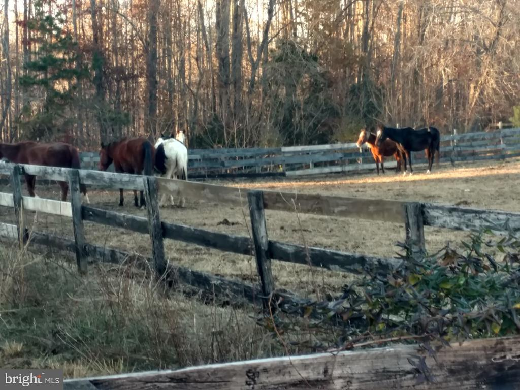 Horses Allowed Trails Throughout Subdivision - 12157 CANTERBURY CT, KING GEORGE