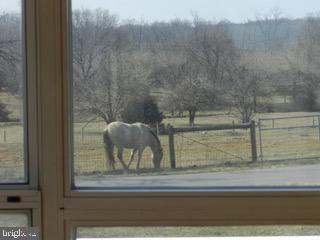 Horses grazing view - 918 WADESVILLE RD, BERRYVILLE