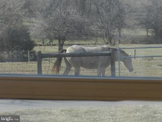 Horses grazing view from the family room window - 918 WADESVILLE RD, BERRYVILLE