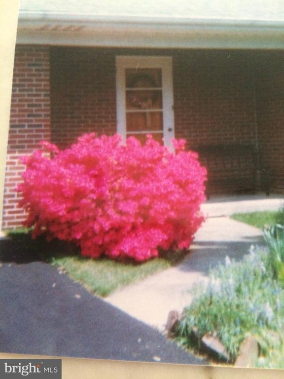 azalea bush  at front walk - 11723 ROBINWOOD DR, HAGERSTOWN