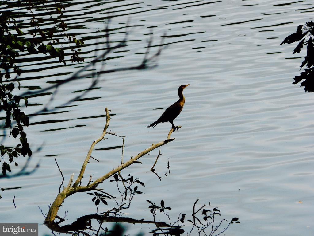 Just One of Many Bird Species at Lake Barcroft - 3502 PINETREE TER, FALLS CHURCH