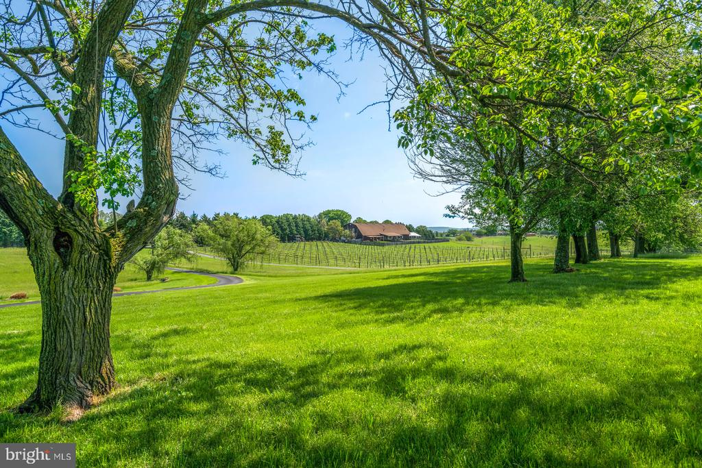 View from front yard - 38581 DAYMONT LN, WATERFORD