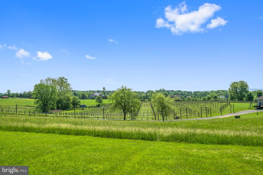 Waterford at its Best! - 38581 DAYMONT LN, WATERFORD