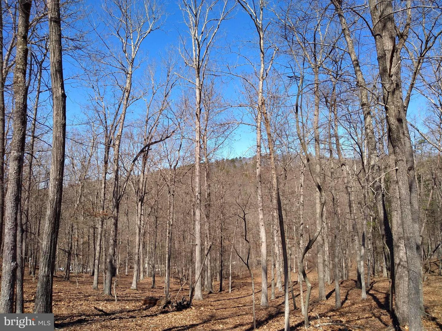 Land for Sale at 3 Pine Trail Drive Old Fields, West Virginia 26845 United States