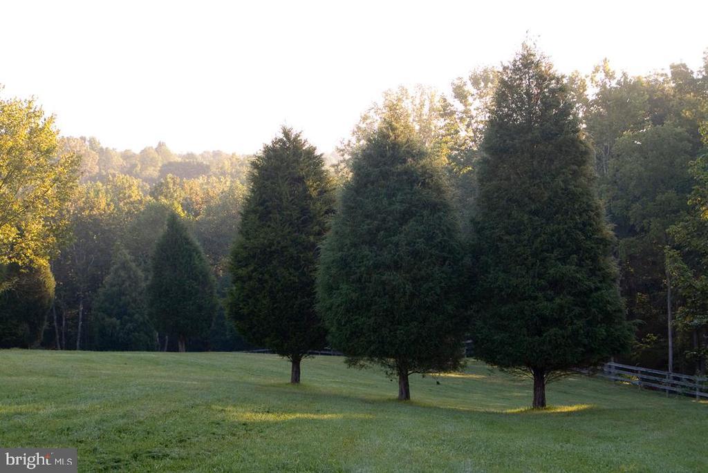 Evergreen trees - 38052 SNICKERSVILLE TPKE, PURCELLVILLE