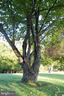 Certified as the  oldest Redbud tree in Virginia - 38052 SNICKERSVILLE TPKE, PURCELLVILLE