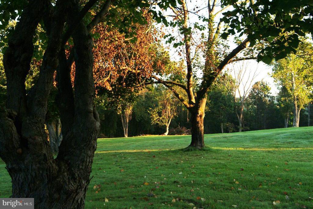 Mature Trees - 38052 SNICKERSVILLE TPKE, PURCELLVILLE