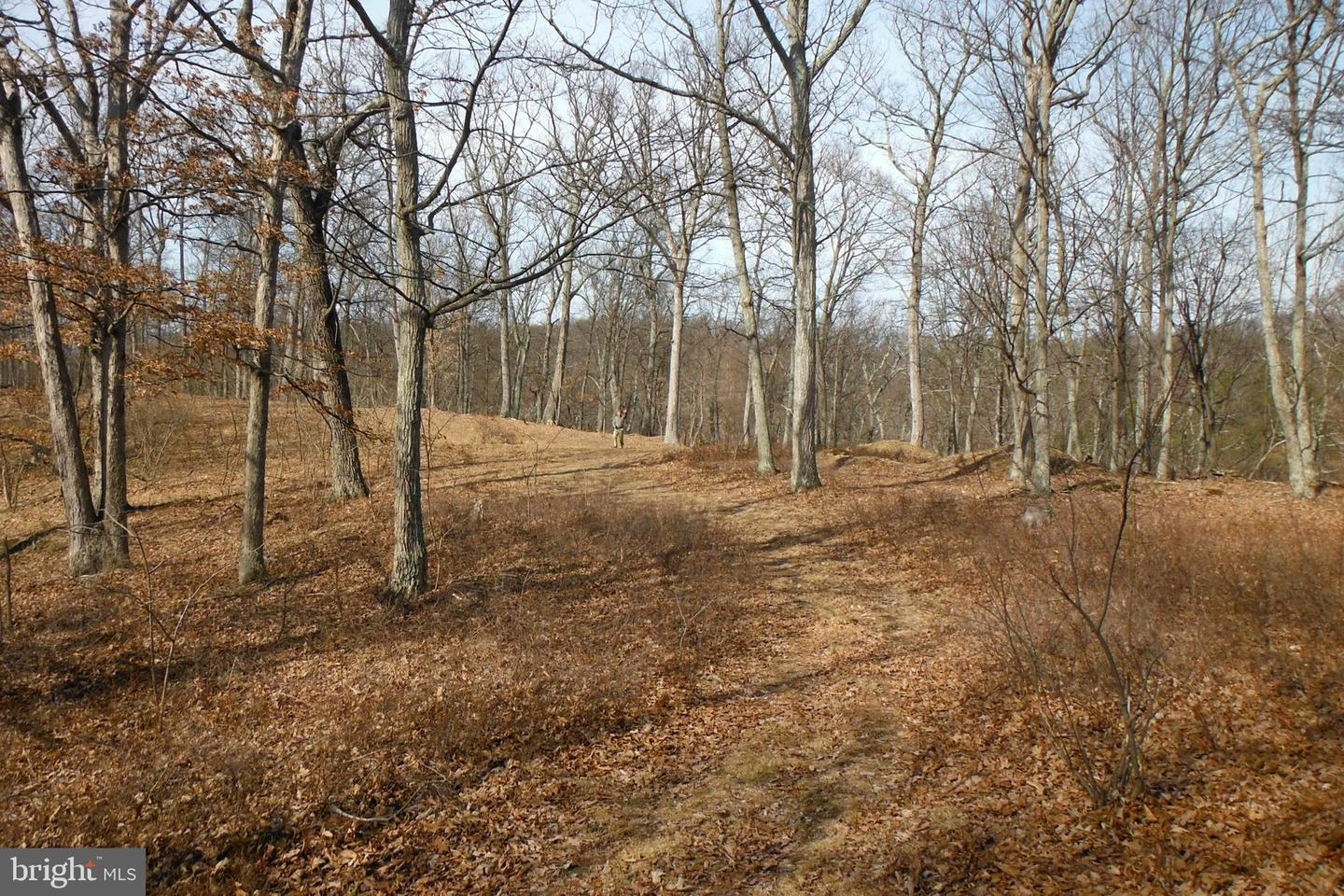 Land for Sale at Bluffs Rd Bluffs Rd Springfield, West Virginia 26763 United States