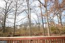 Mature trees - 25989 DONOVAN DR, CHANTILLY