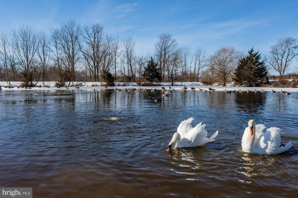 Large stocked pond with abundant waterfowl - 40041 HEDGELAND LN, WATERFORD