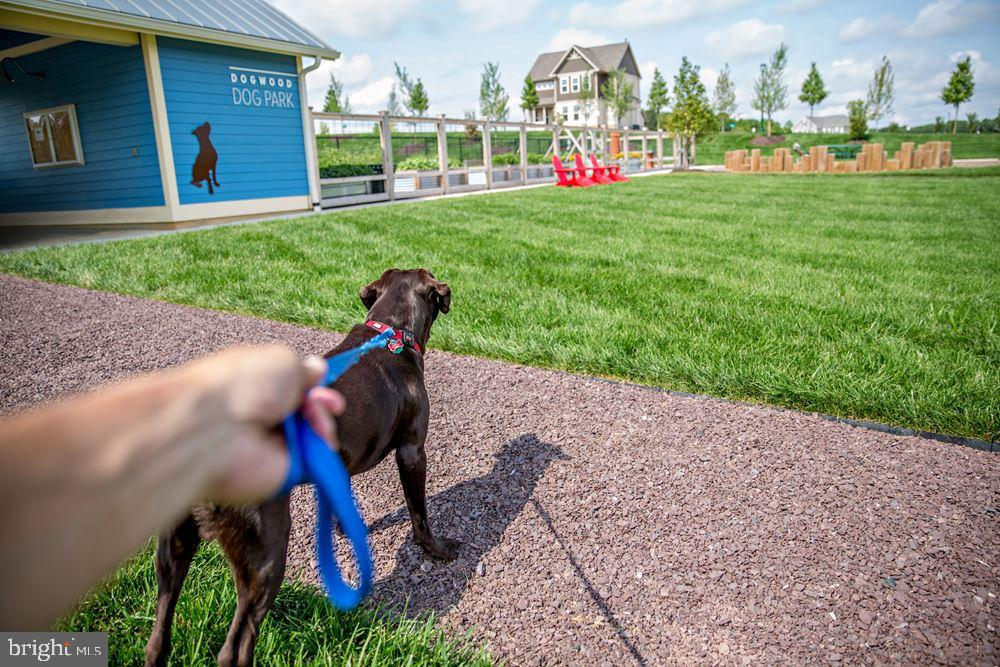 Dog Park - 861 BASSWOOD DR, STAFFORD