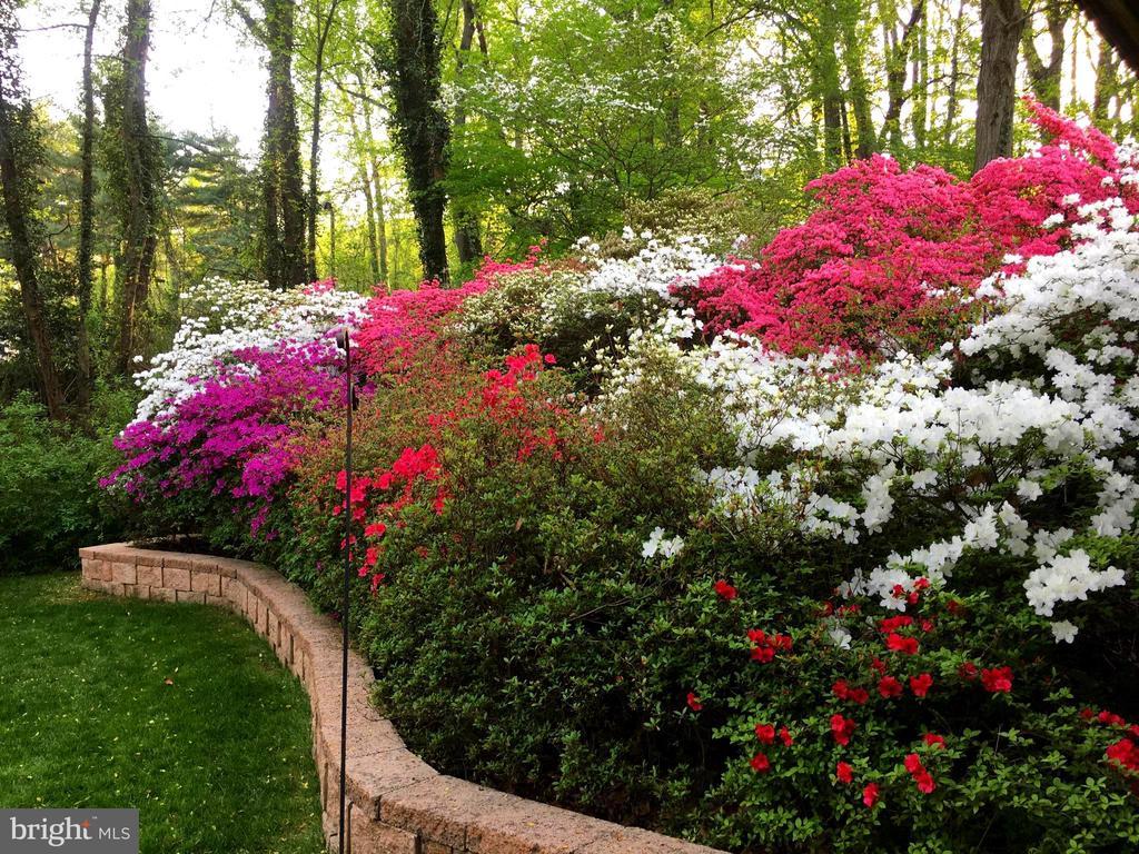 Azaleas, Rhododendrons & more - 9329 GLENBROOK RD, FAIRFAX