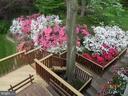 Wonderful azaleas below the deck. - 9329 GLENBROOK RD, FAIRFAX
