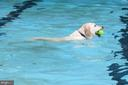 End of year dog swim. Fun to watch. All invited. - 9329 GLENBROOK RD, FAIRFAX