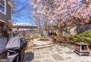 Super-Cute Tree Fort through your Cherry Blossom - 2035 N TAYLOR ST, ARLINGTON