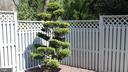 Hinoki Bonsai - 2131 N SCOTT ST, ARLINGTON