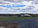 View from Front  to 100 Acre Farm in Preservation - 38042 GREENWOOD FARM LN, PURCELLVILLE