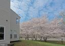 Beautiful view of cherry trees in back - 5312 MAPLE VALLEY CT, CENTREVILLE