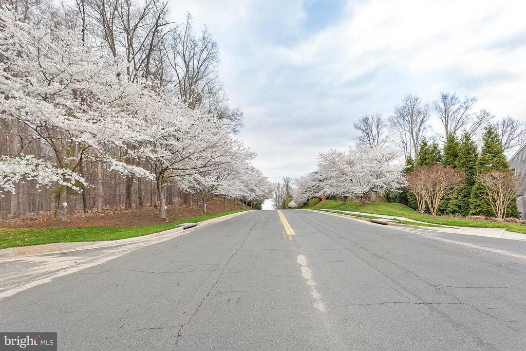 Cherry Blossoms along neighborhood streets! - 20377 WATER VALLEY CT, STERLING