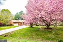 Lovely Spring blossoms add brilliant color. - 2015 MERRYMOUNT DR, FREDERICKSBURG