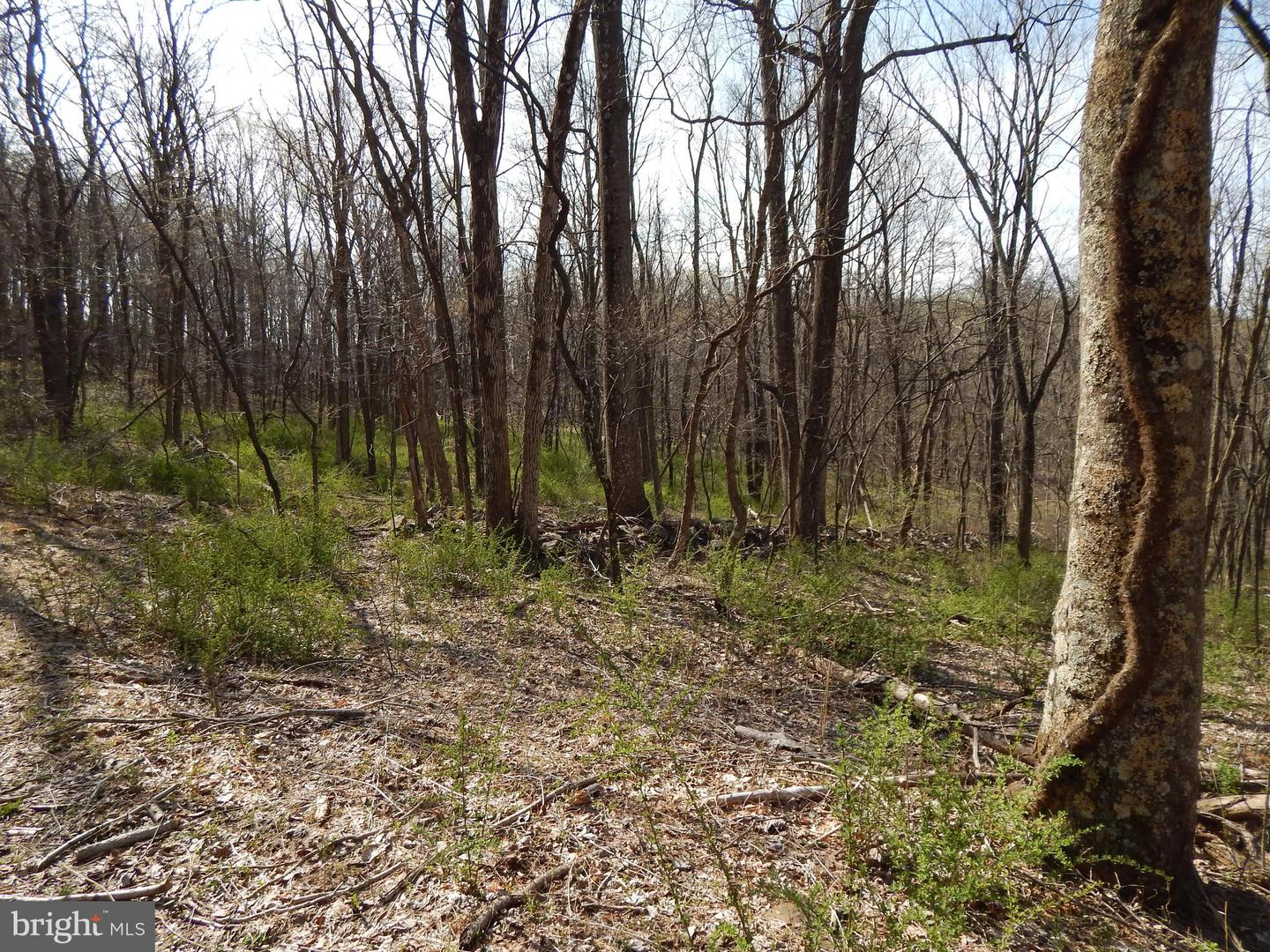 Land for Sale at Lot 1 Off Spicy Cedar Lane Berkeley Springs, West Virginia 25411 United States