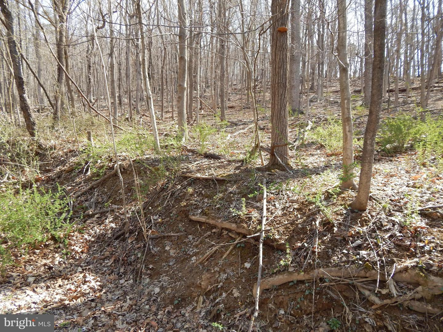 Land for Sale at Lot 3 Off Spicy Cedar Lane Berkeley Springs, West Virginia 25411 United States