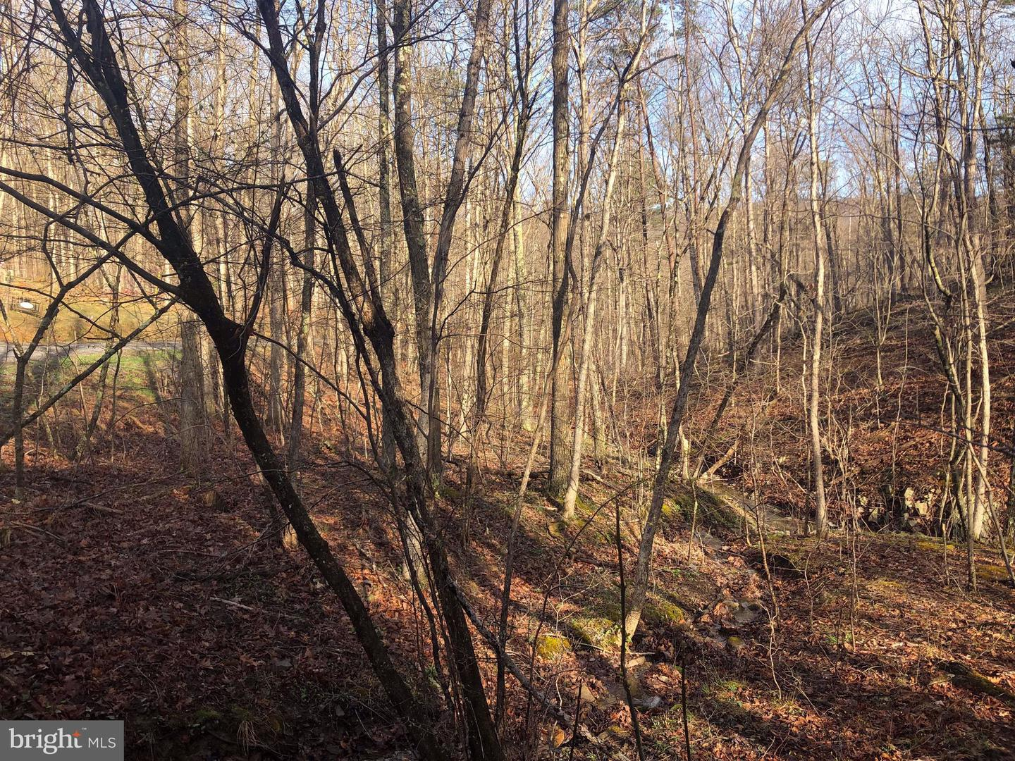 Land for Sale at Albino Dr Albino Dr Springfield, West Virginia 26763 United States