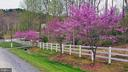 Beautiful Spring Trees Along The Drive - 8187 PETERS RD, FREDERICK