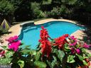 In-ground Pool - 15616 NEATH DR, WOODBRIDGE