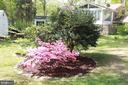 Back garden - 9005 CHERRYTREE DR, ALEXANDRIA