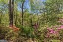 Natural yard - 11310 MYRTLE LN, RESTON