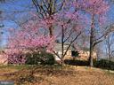flowering mature trees - 6103 RIVER RD, FREDERICKSBURG