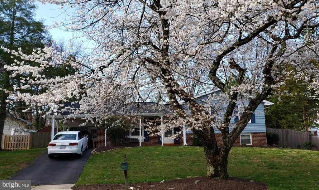 The beautiful cherry trees of Spring! - 11340 RAMBLING RD, GAITHERSBURG