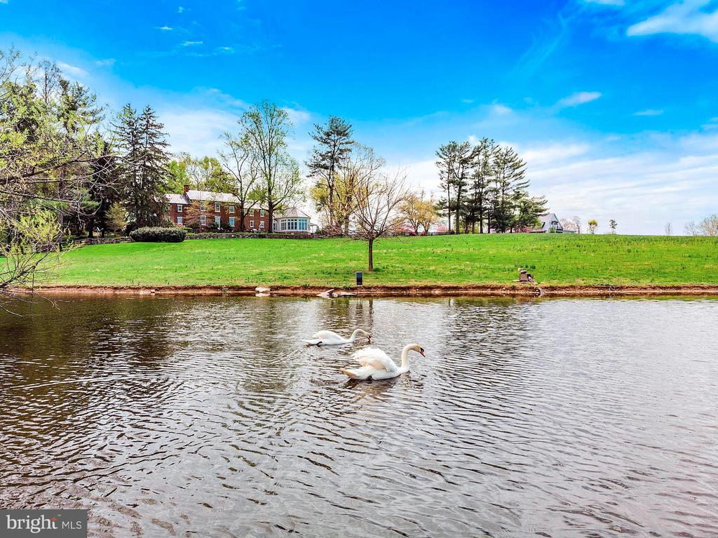 Pair of swans on the large pond - 40041 HEDGELAND LN, WATERFORD