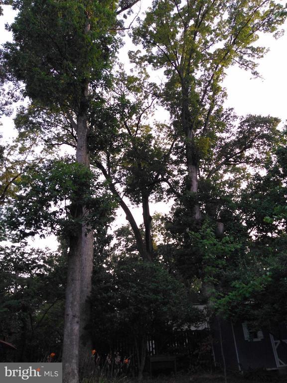 Mature trees in large Backyard - 876 N KENSINGTON ST, ARLINGTON
