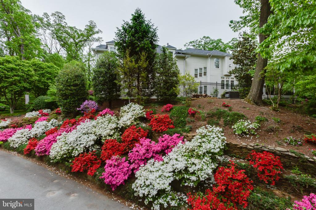 Hundreds of azaleas in the gardens of  this home - 1103 FINLEY LN, ALEXANDRIA