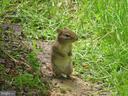 Wildlife Visitor - 8623 APPLETON CT, ANNANDALE